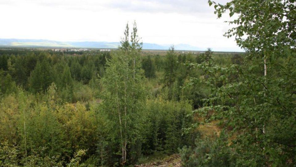 На-колымский-бесплатный-гектар-уже-подали-15-заявок.jpg